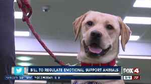 New bill would crack down on misuse of emotional support animal designations [Video]