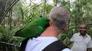 Parrot takes serious liking to visitor at nature park [Video]