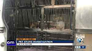 Boca Raton pet store under investigation by Palm Beach County Animal Care and Control [Video]