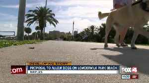 Proposal to allow dogs on Lowdermilk Park Beach [Video]