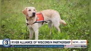 River Alliance of Wisconsin announces partnership to better protect native species [Video]