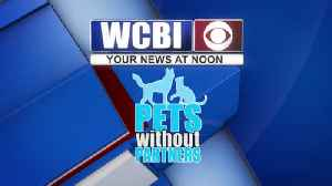 Pets without Partners 11/15/19 [Video]