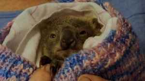 Helpless victims of Australia's bushfires [Video]