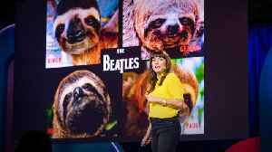 Sloths! The strange life of the world's slowest mammal | Lucy Cooke [Video]