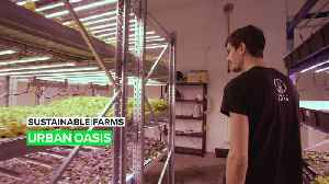 Sustainable Farms: Get your daily dose of leafy greens here [Video]