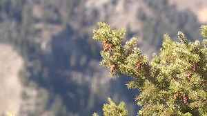 A new stewardship will look at ways of improving the health of the Sawtooth National Forest [Video]