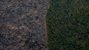 News video: Brazil's Space Agency Reports Soaring Rates Of Rainforest Destruction