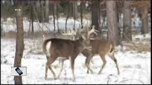 The serious consequences of an illegal deer hunt [Video]