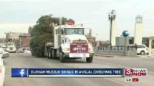 News video: Durham Museum brings in annual Christmas tree
