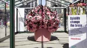 Brain Flower Exhibit Opens at Purdue [Video]