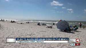 Naples seeks resident input on proposed dog beach [Video]