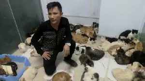 Cops Rescue 300 Cats In Lorry Destined For Dinner Plates [Video]