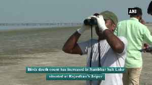 Death toll of birds mount to 15000 at Rajasthan Sambhar Lake [Video]