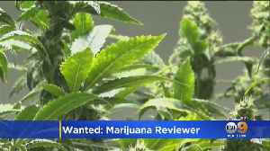 Get Paid $3K Per Month To Review Marijuana Products [Video]