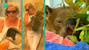 Badly Burnt Koala Reunites With His Rescuer [Video]