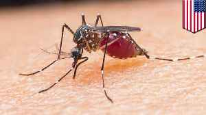 Deadly mosquito brain-infecting virus claims 6th victim in Michigan [Video]
