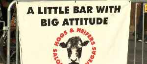 Hogs & Heifers case goes to court [Video]