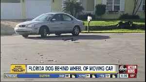 Florida dog behind wheel of moving car [Video]