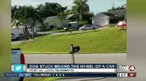 Dog puts car into reverse doughnuts on cul-de-sac in Florida [Video]