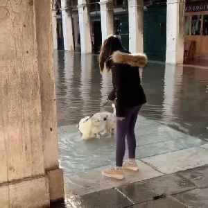 Dog Happily Splashes Around in Water Clogged Street in Venice [Video]