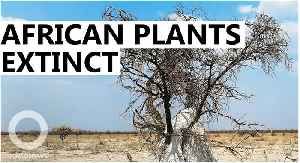 A third of Africa's tropical plants could go extinct: Study [Video]