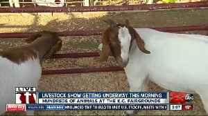 Harvest Moon Livestock Show [Video]
