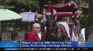 Mayor De Blasio Set To Sign Animal Cruelty Bills [Video]
