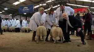 Boris Johnson shears a sheep on campaign trail in Wales [Video]