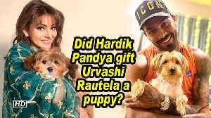 Did Hardik Pandya gift Urvashi Rautela a puppy? [Video]