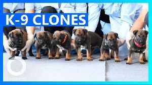 Beijing police force just cloned 6 K-9 dogs [Video]