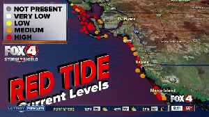 Concerns over red tide in Southwest Florida ahead of Thanksgiving holiday [Video]