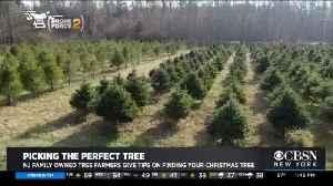 News video: CBSN New York Visits 2nd Generation Christmas Tree Farm