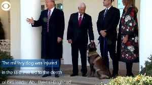 WEB EXTRA: Trump Honors Dog From Al-Baghdadi Raid [Video]