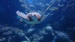 Scuba divers get up close & personal with sea turtle [Video]