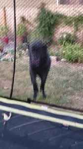 Dog Funnily Hops To Get To Other Side Of Net [Video]