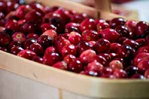 Poll Shows Cranberry Sauce Is the Most Hated Thanksgiving Food [Video]