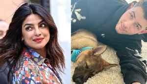 Priyanka Chopra Surprises Nick Jonas With New Puppy [Video]