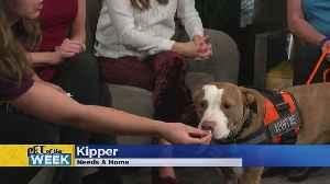 Pet Guest Of The Week: Kipper! [Video]