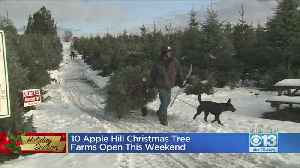 10 Apple Hill Christmas Tree Farms Open This Weekend [Video]