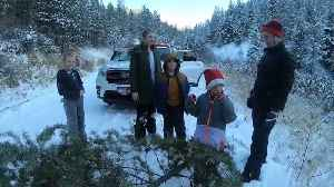 Cutting down a Christmas tree in the forest is an Idaho tradition [Video]