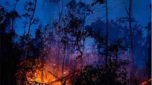 Leonardo DiCaprio Accused Of Burning The Amazon Forest [Video]