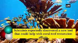 Underwater loudspeakers can help restore coral reef [Video]