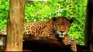 Planet SOS: Guatemala's illegal animal trade [Video]