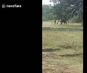 Indian villagers run up to pull rogue elephant's tail in dangerous teasing prank [Video]