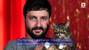 Internet Cat Sensation Lil BUB Has Died [Video]