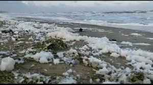News video: Famous beach in south India flooded with 'toxic foam'