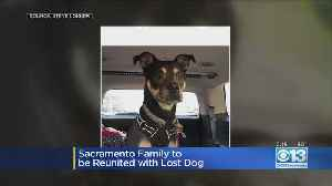Sacramento Family To Be Reunited With Lost Dog [Video]