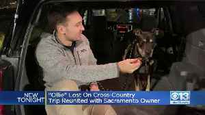 Ollie's Journey Home: Sacramento Family Reunited With Dog Three Months After Losing Animal On Move From Florida [Video]