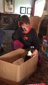 News video: Kid Cries Adorably After Receiving Puppy As Chirstmas Gift