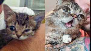News video: Internet Celebrity Cat Lil Bub Dies